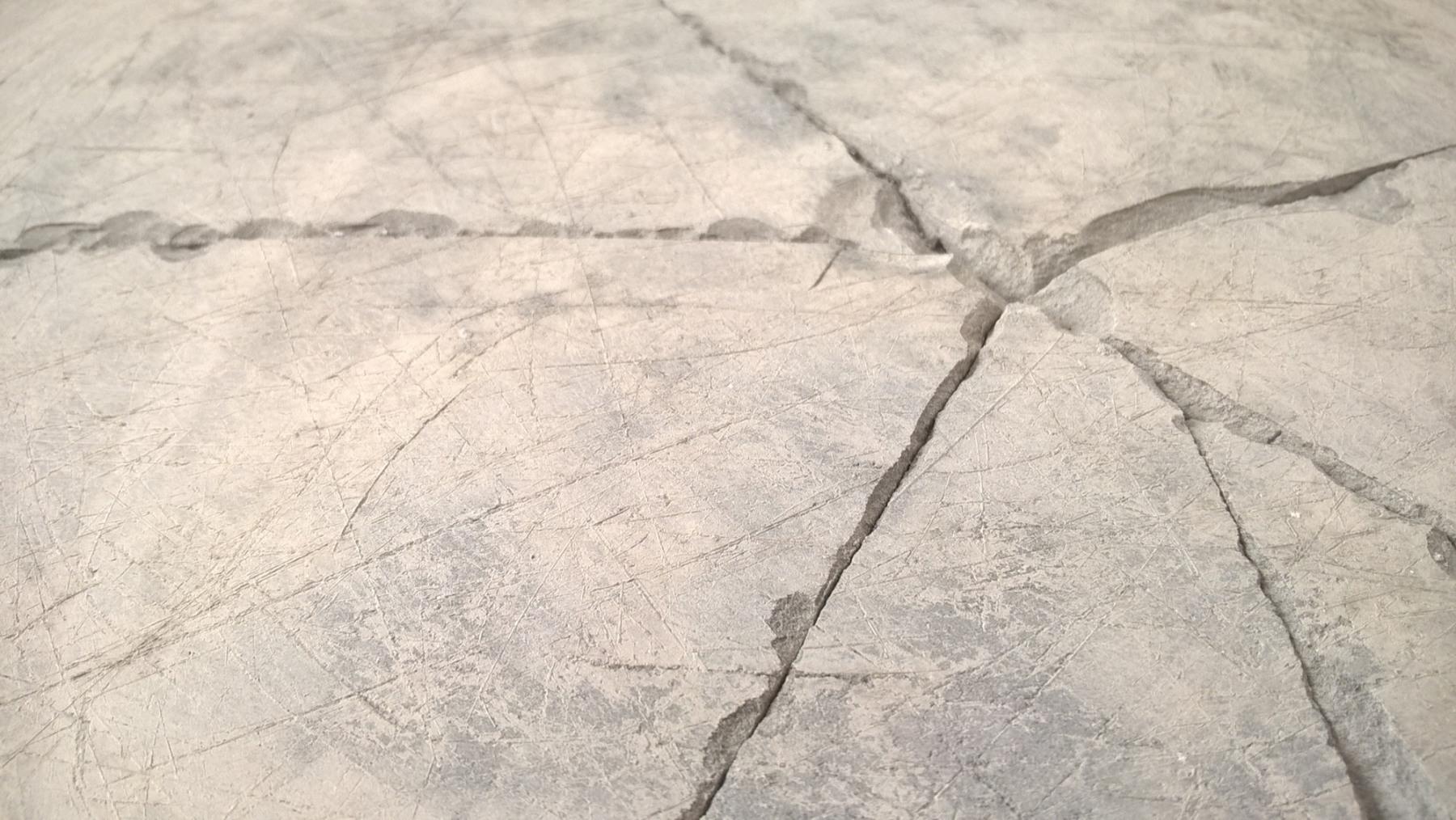 niko_Fossil3_3